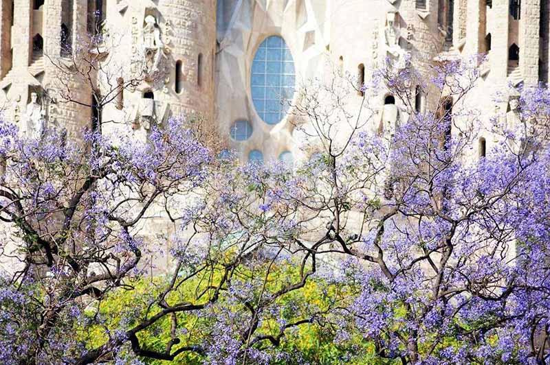 Dias floridos na primavera de Barcelona
