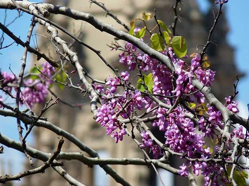 Beleza de Barcelona na Primavera